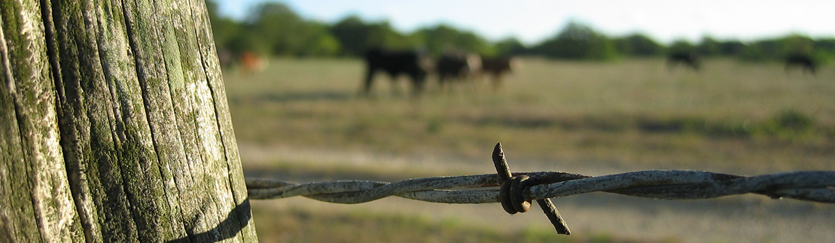 texas-fence-cattle-barbwire